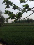 我的村庄我的家---李金海