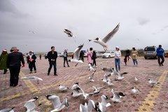中央环保督察组:青海自然保护区违规旅游开发问题突出