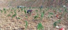 山西平陆:林业局矿山植被恢复治理工作有序推进,成效显著