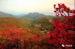 山西平陆:平陆马泉沟:东山深处赏秋景,红不醉人人自醉