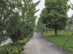 湖北十堰:花开四季绿满城