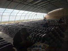 发展食用菌产业促脱贫